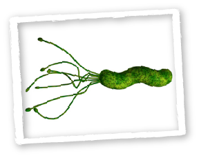 Artistic Impression of Helicobacter Pylori